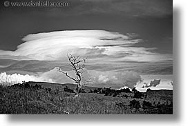 black and white, clouds, horizontal, latin america, patagonia, trees, photograph