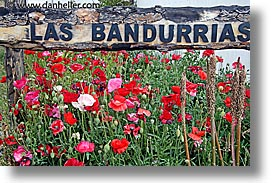 bandurrias, estancia lazo, flowers, horizontal, las, latin america, patagonia, photograph