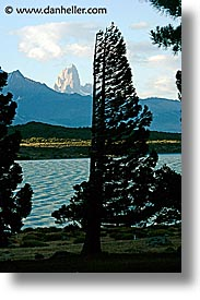 central, lago viedma, latin america, patagonia, torres, trees, vertical, photograph