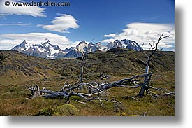 dead, horizontal, latin america, mountains, patagonia, trees, photograph