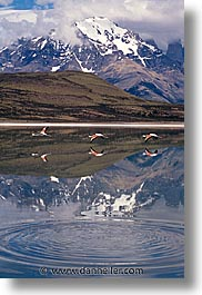 latin america, mountains, patagonia, reflect, vertical, photograph