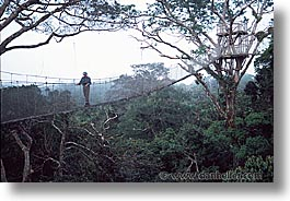 amazon, canopy, horizontal, jungle, latin america, peru, rivers, photograph