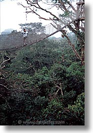 amazon, canopy, jungle, latin america, peru, rivers, vertical, photograph