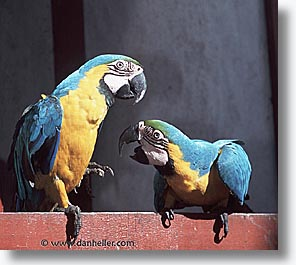 amazon, birds, horizontal, jungle, latin america, macaws, peru, rivers, photograph