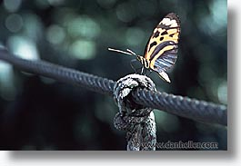 amazon, butterflies, horizontal, insects, jungle, latin america, peru, rivers, photograph