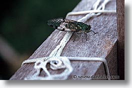 amazon, horizontal, insects, jungle, latin america, peru, rivers, photograph