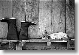 amazon, black and white, boots, dogs, horizontal, jungle, latin america, peru, rivers, photograph