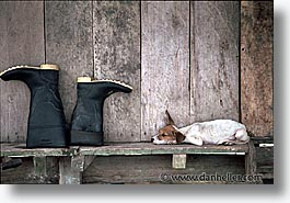 amazon, boots, dogs, horizontal, jungle, latin america, peru, rivers, photograph