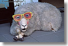 auckland, glasses, horizontal, new zealand, sheep, photograph