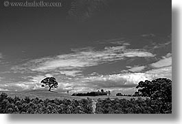 auckland, black and white, horizontal, new zealand, sky, trees, photograph