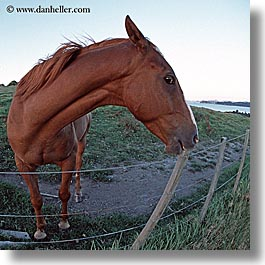 bayof islands, fisheye, horses, new zealand, square format, photograph
