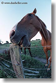 bayof islands, fisheye, horses, new zealand, vertical, photograph