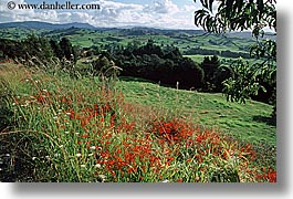 bayof islands, hillside, horizontal, new zealand, wildflowers, photograph