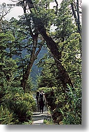 forests, hikers, new zealand, vertical, photograph