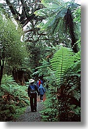 forests, jungle, new zealand, paths, vertical, photograph