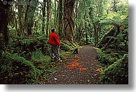 forests, horizontal, lush, men, new zealand, photograph