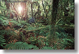 forests, horizontal, lush, new zealand, photograph