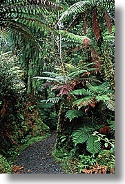 forests, lush, new zealand, vertical, photograph