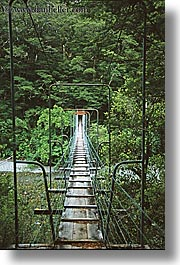 bridge, forests, new zealand, suspension, vertical, photograph