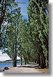 lake wanaka, new zealand, trees, vertical, photograph