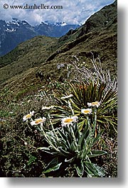flowers, new zealand, routeburn, vertical, photograph