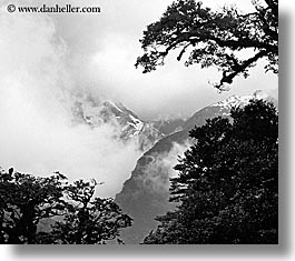 black and white, horizontal, mountains, new zealand, routeburn, trees, photograph