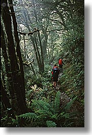 new zealand, routeburn, vertical, woods, photograph