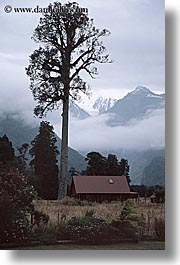fog, foggy, houses, mountains, new zealand, scenics, trees, vertical, photograph