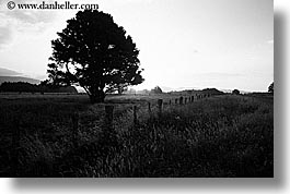 black and white, fields, horizontal, new zealand, sunsets, trees, photograph