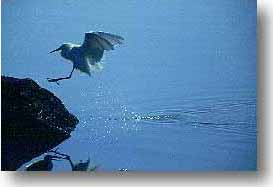 bird landing, photo headers, bird landing, photo headers, photograph