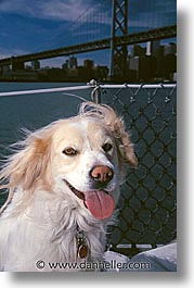 animals, bridge, dogs, sam, sammy, vertical, photograph