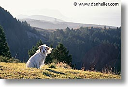 animals, dogs, horizontal, landscapes, sam, sammy, photograph