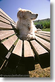 animals, benches, dogs, sam, sammy, vertical, photograph