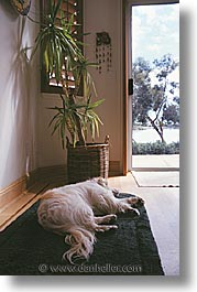animals, dogs, doors, sam, sammy, sleep, vertical, photograph