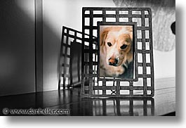 animals, color composite, color/bw composite, dogs, framed, horizontal, sammy, photograph