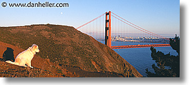 animals, dogs, golden gate bridge, horizontal, panoramic, sammy, views, photograph