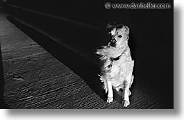 animals, dogs, horizontal, long, sammy, shadows, photograph