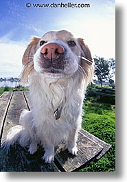 animals, dogs, nose, sammy, vertical, photograph