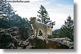 animals, dogs, horizontal, rocks, sammy, photograph