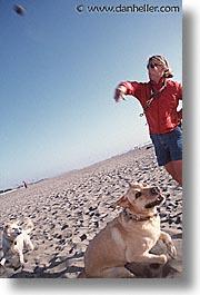animals, beach dogs, canine, dogs, owners, pals, vertical, photograph