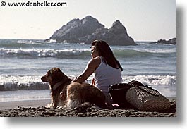 animals, beach dogs, canine, dogs, horizontal, owners, pals, photograph