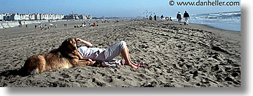 animals, beach dogs, canine, dogs, horizontal, owners, pals, panoramic, photograph