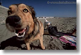 animals, beach dogs, canine, dogs, horizontal, pals, portraits, photograph