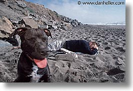 animals, beach dogs, canine, dogs, horizontal, portraits, photograph