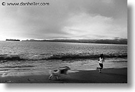 animals, beach dogs, black and white, canine, dogs, horizontal, running, photograph