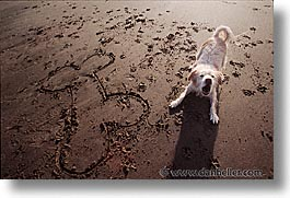 animals, beach dogs, canine, dogs, horizontal, sammy, photograph