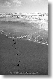 animals, beach dogs, canine, dogs, paws, prints, vertical, photograph