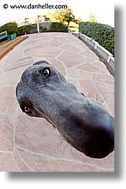 animals, big, canine, dogs, fisheye lens, nose, nox, vertical, photograph