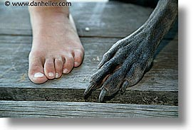 animals, canine, dogs, feet, horizontal, nox, photograph