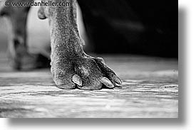 animals, canine, dogs, horizontal, nox, paws, photograph